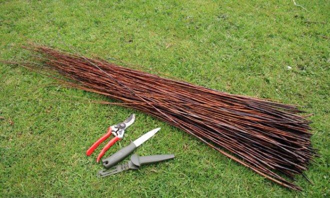 Заготовка ивовых прутьев