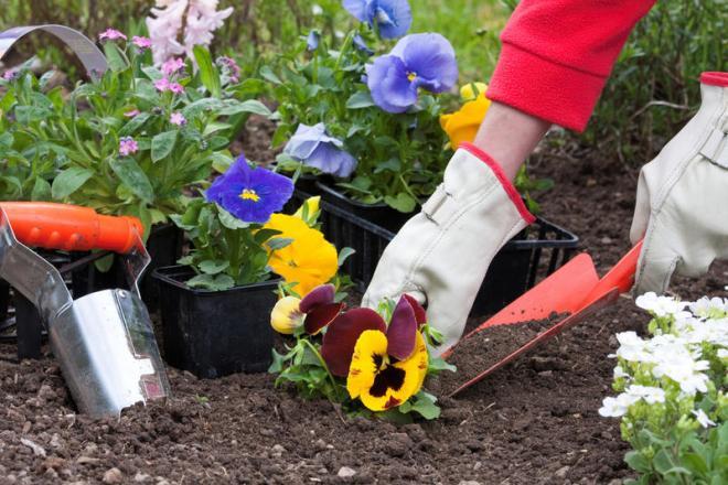 Высаживание цветов для палисадника