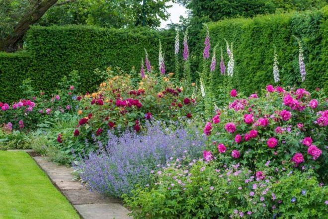 Миксбордер с розами в английском стиле