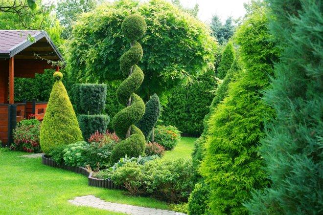 Палисадник из вечнозеленых растений